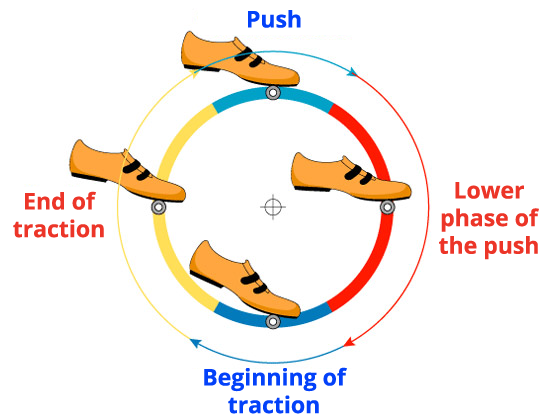The pedaling cycle to improve the cyclism